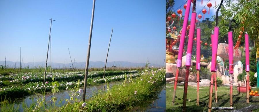 photographie de jardins flottants du lac Inlé en Birmanie