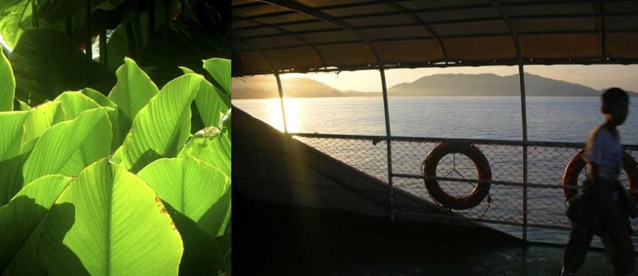 feuille de bananier bateau
