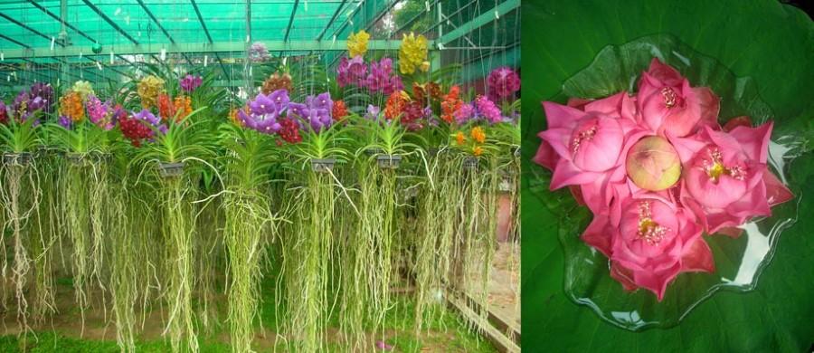 photographies de fleurs d'orchidées et de lotus