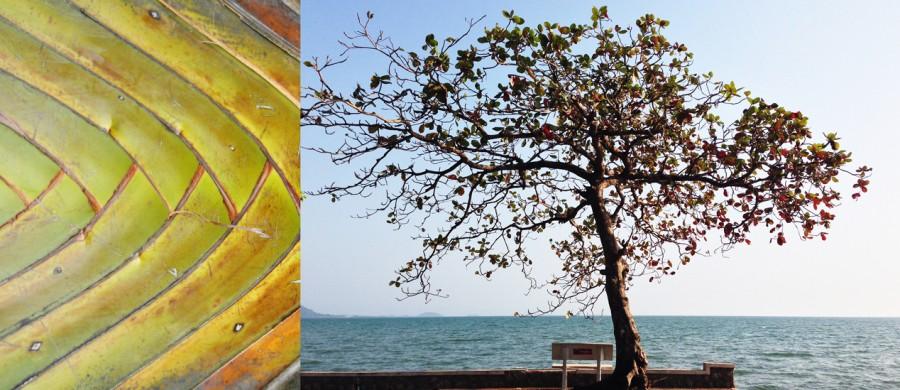 photographie d'arbres du Cambodge